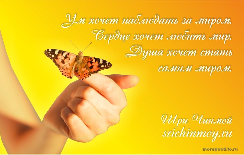 46.jpg_1445751758